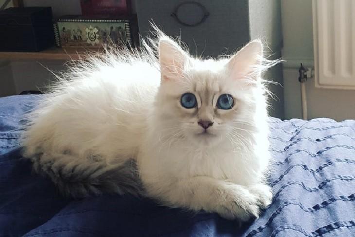 חתלתולים חמודים: חתול עם פרווה עומדת