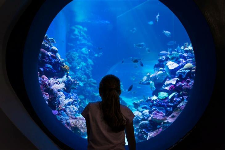 חופשה באילת: ילדה מול אקווריום ענק