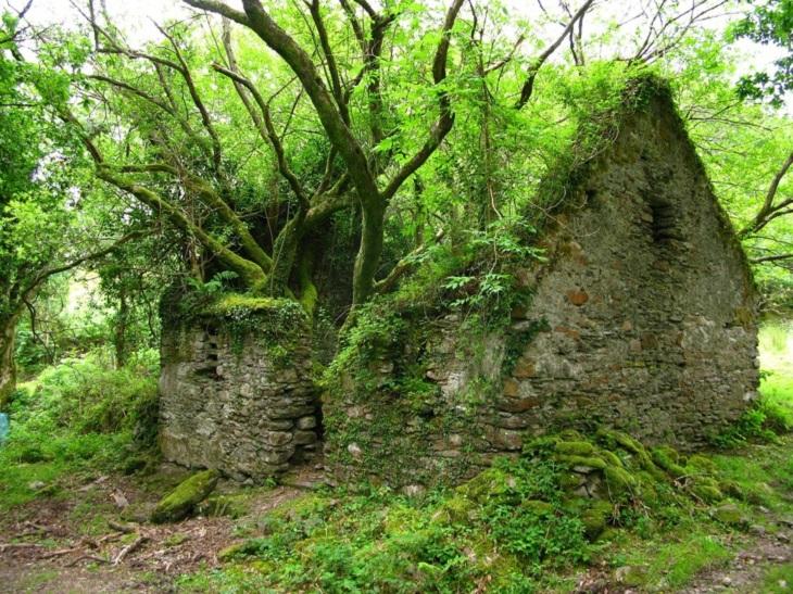 טבע משתלט על חפצים מעשי ידי אדם: מבנה אבן שהטבע השתלט עליו