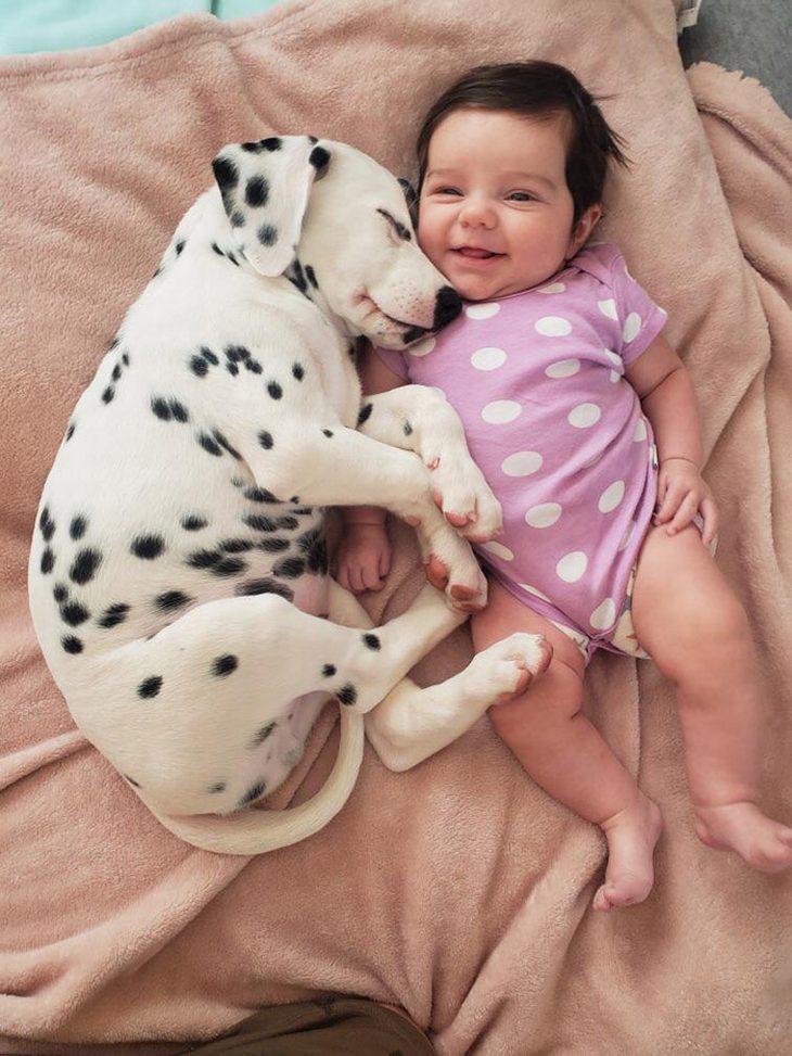 תמונות של בעלי חיים חמודים: גור כלבים דלמטי מחבק תינוק בבגד מנוקד