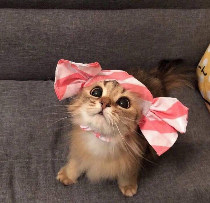תמונות של בעלי חיים חמודים: חתול מחופש לסוכריה