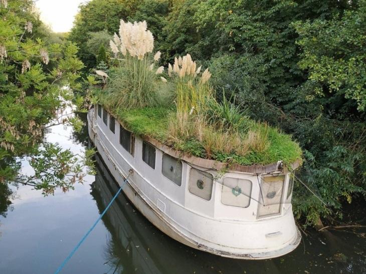 טבע משתלט על חפצים מעשי ידי אדם: סירה שהטבע השתלט עליה