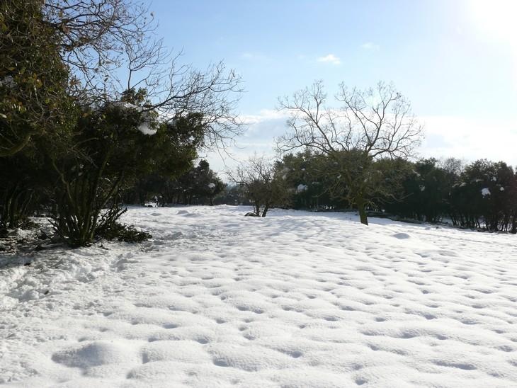 מסלולי טיול ברמת הגולן: יער אודם מושלג