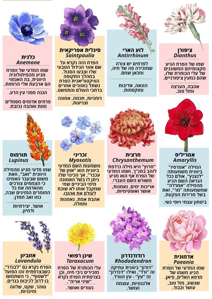 מה מסמל כל פרח ומאיפה הגיע שמו