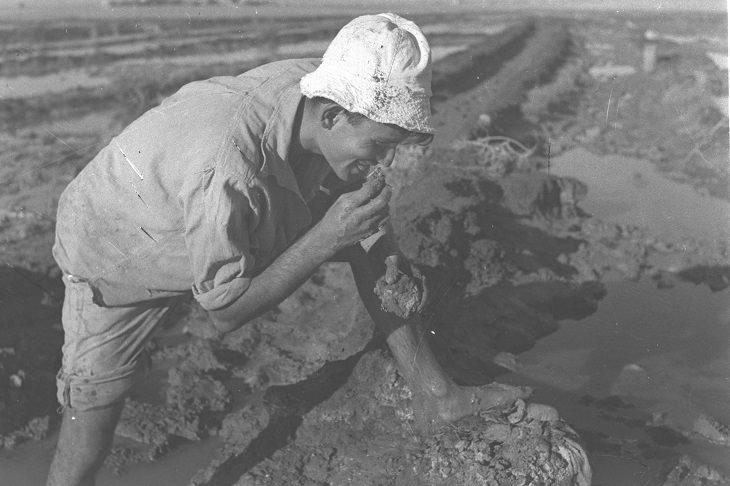 תמונות נוסטלגיות מקיבוצים: חבר קיבוץ בית הערבה טועם מהאדמה