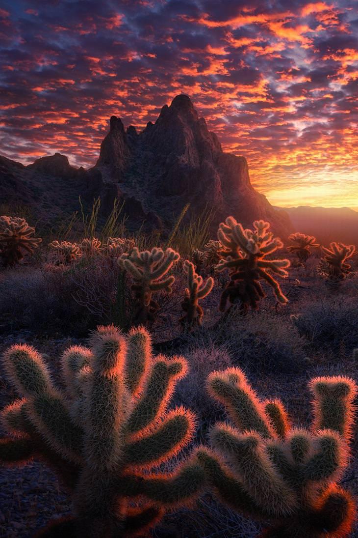 תמונות של נופי טבע: קקטוסים בשעת שקיעה במדבר