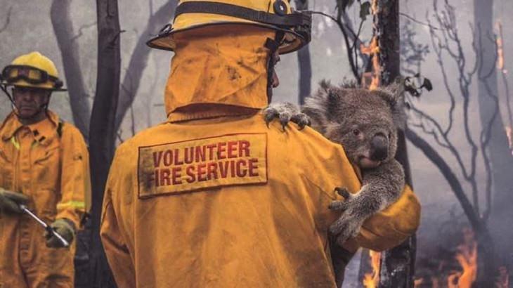 תמונות משריפה שפקדה את אוסטרליה: כבאי מחזיק קואלה על רקע עצים עם להבות