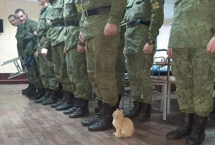 חיות חמודות: גור חתולים לצד חיילים שעומדים דום