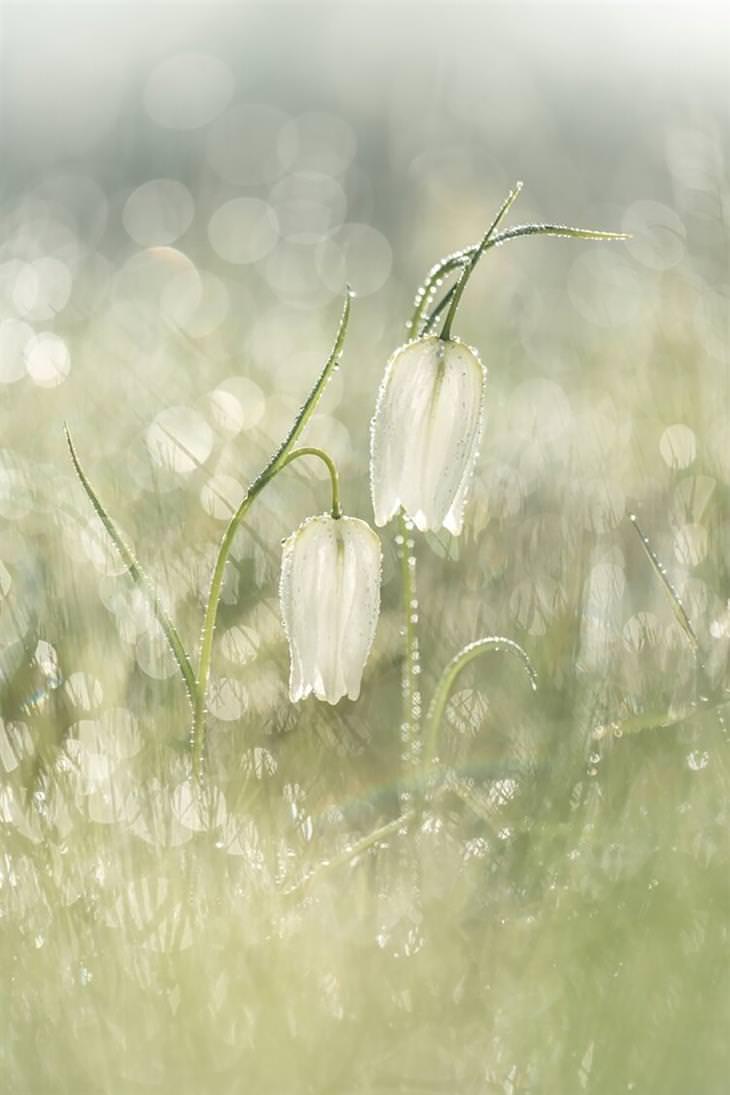 זוכים בתחרות צילומי התקריב 2020: תמונת תקריב של פרחים בשדה