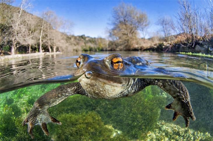 זוכים בתחרות צילומי התקריב 2020: צפרדע במים