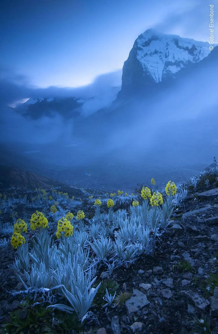 תמונות מתחרות צלם חיות הבר לשנת 2020: פרחים צהובים על רקע הרים כחולים