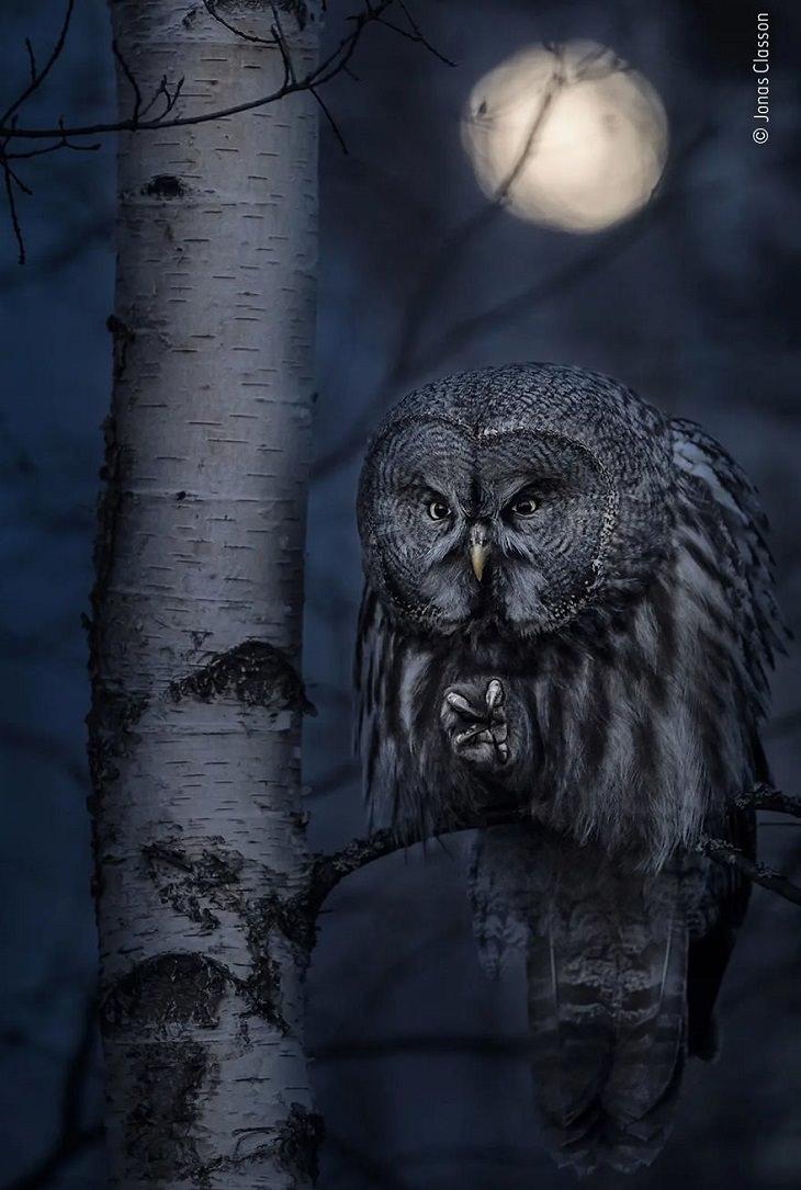 תמונות מתחרות צלם חיות הבר לשנת 2020: תנשמת על עץ בלילה