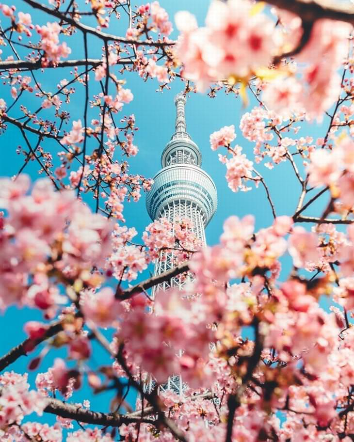 תמונות של יפן: מגדל עץ השמים