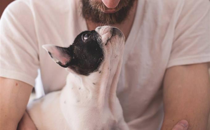 מה כדאי לראות בנטפליקס: איש וכלב