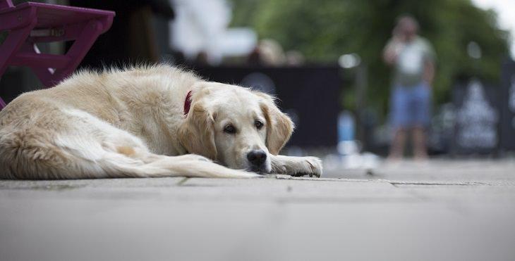 מה אסור להגיד לאדם שסובל: כלב עצוב