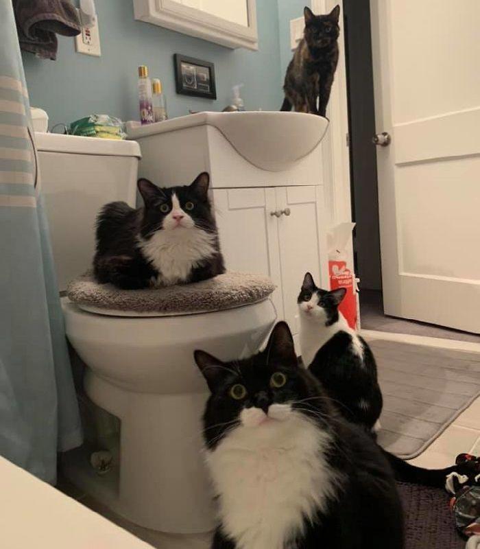 חתולים חמודים שלא מכבדים פרטיות: חתולים בחדר מקלחת