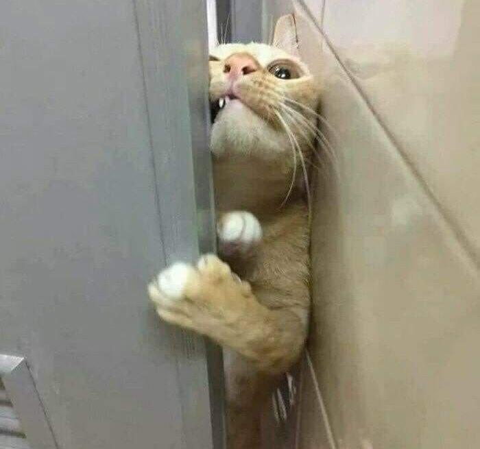 חתולים חמודים שלא מכבדים פרטיות: חתול מנסה להשתחל לפתח קטן בדלת