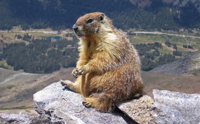 נכון או לא נכון על חיות: מרמיטה