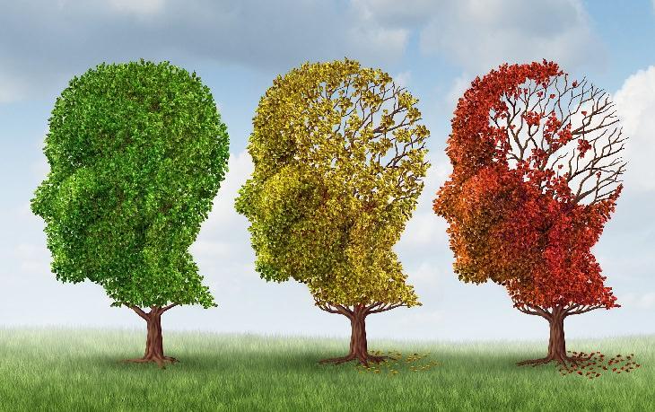 השפעות הזקנה על המוח והזיכרון: איור של תהליך הזדקנות המוח כ-3 עצים שונים בצורת ראש