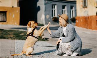 מצא את ההבדלים: אישה וכלב