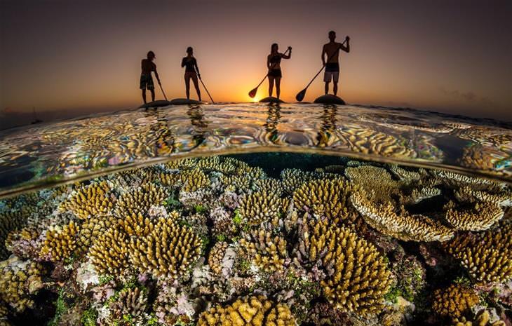 תמונות מתחרות צילום האוקיינוס 2020: 4 אנשים גולשים על סאפ מעל אלמוגים