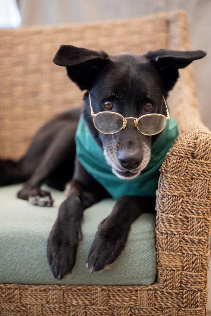 כלבים זקנים חמודים