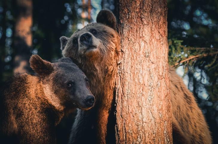 תמונות של בעלי חיים בטבע: דובים