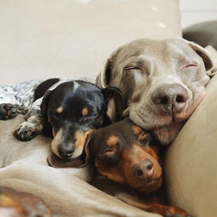שיפור מצב הרוח: כלבים חמודים