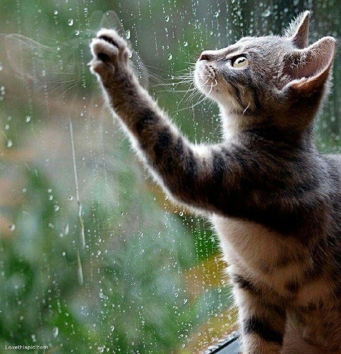 חיות חמודות בגשם: חתול מול חלון עם טיפות גשם