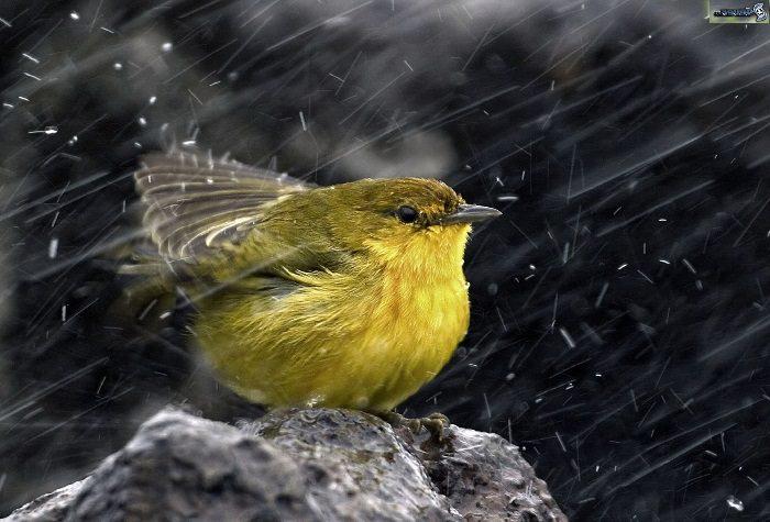 חיות חמודות בגשם: ציפור בגשם