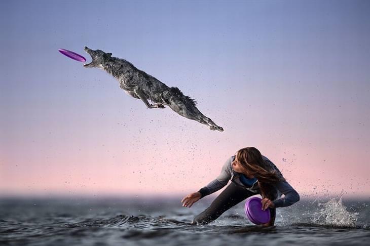 תמונות מתחרות הצילום הבינלאומית 2020: כלב קופץ מעל איש כדי לתפוס צלחת מעופפת בפה
