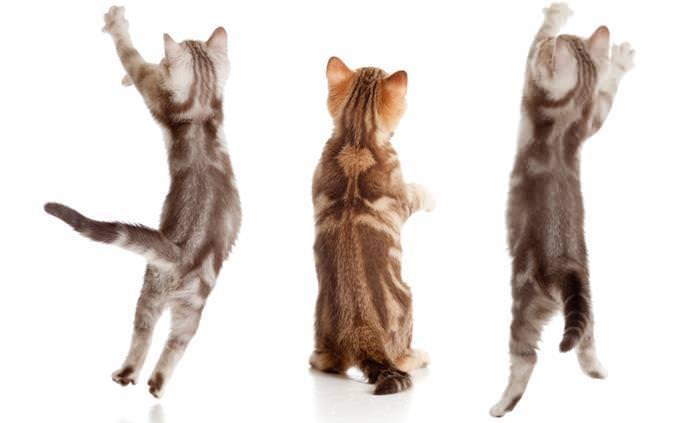 מבחן הכרת חתולים: 3 חתלתולים