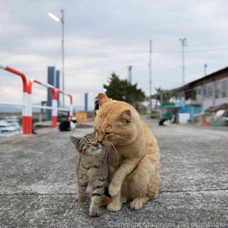 חתולי רחוב חמודים ביפן