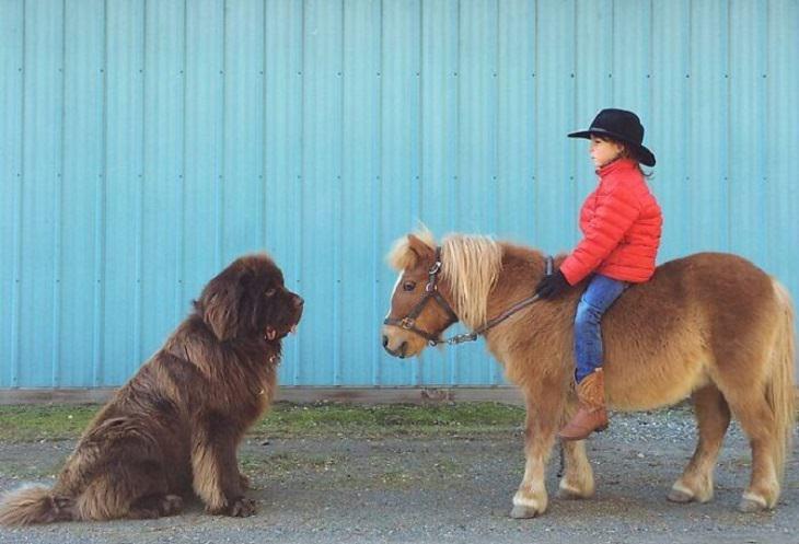 תמונות של כלבים ענקיים: ילדה רכובה על פוני מול כלב גדול