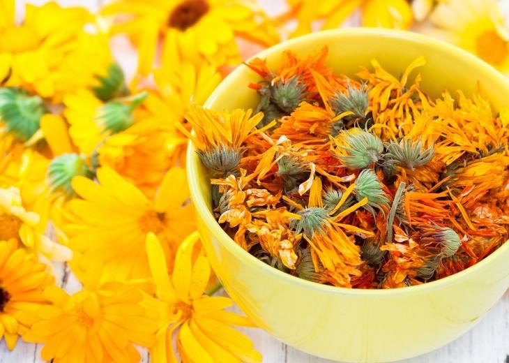 יתרונות בריאותיים של צמח ציפורני החתול - קלנדולה:קערת פרחי קלנדולה יבשים לצד פרחים חיים
