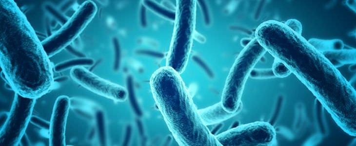 עובדות מדעיות: בקטריות