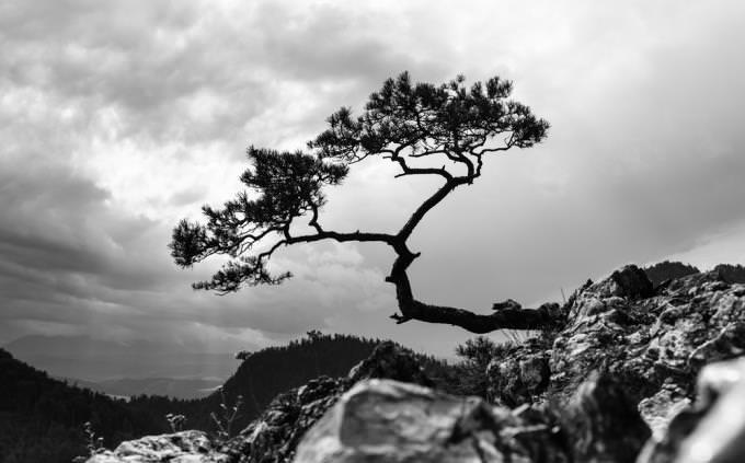 מבחן צבעים ואופי: עץ