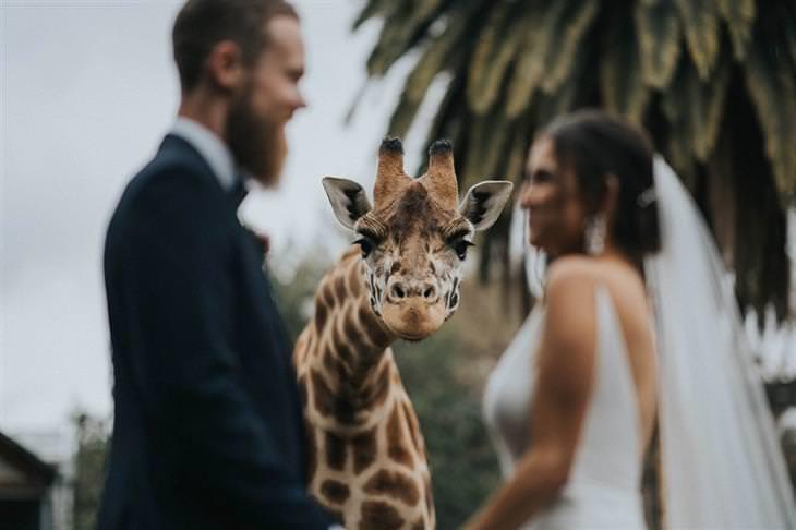 תמונות החתונה של השנה: ג'ירף מציץ מאחורי זוג שמתחתן