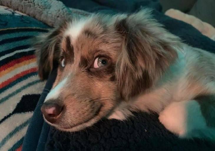 כלבים חייכנים: כלב מחייך עם עיניים גדולות ובהירות