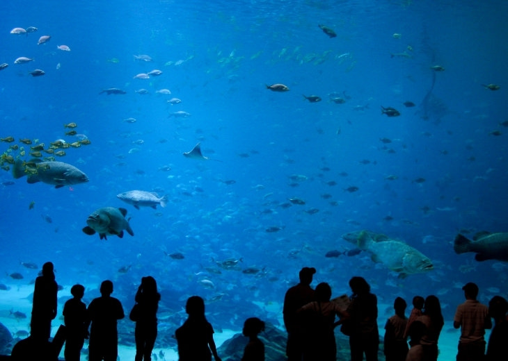 האקווריומים המומלצים בעולם: תצוגת דגים באקווריום של ג'ורג'יה