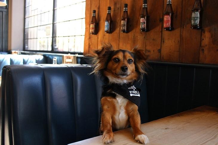 בדיחה על כלב מדבר בבר: כלב עומד ליד שולחן בר