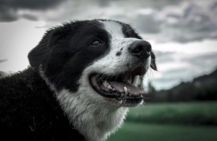 טיפול בכלבים בחורף: כלב ביום חורפי