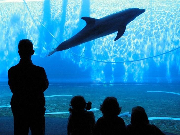 אטרקציות גנואה: מבוגרים וילדים צופים בדולפין שוחה באקווריום של גנואה