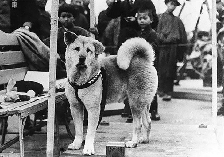סיפורו של האצ'יקו: הכלב האצ'יקו מחכה בתחנת הרכבת