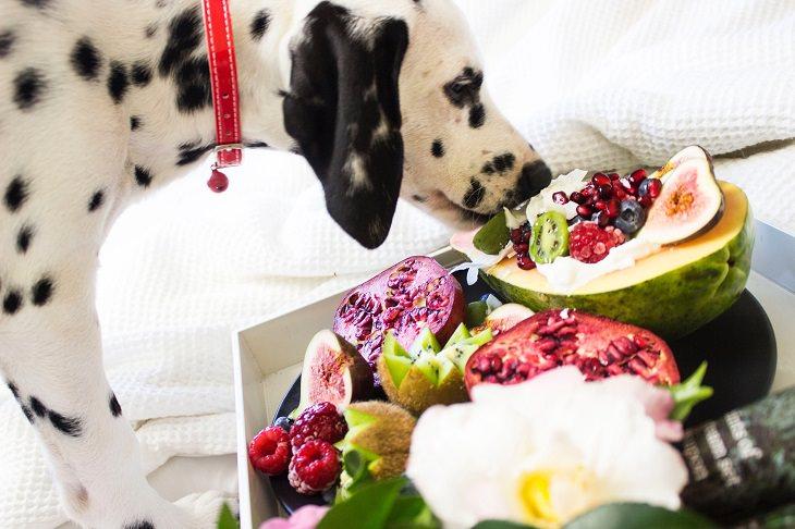 פירות וירקות מומלצים ואסורים לכלבים: כלב דלמטי אוכל ממגש פירות