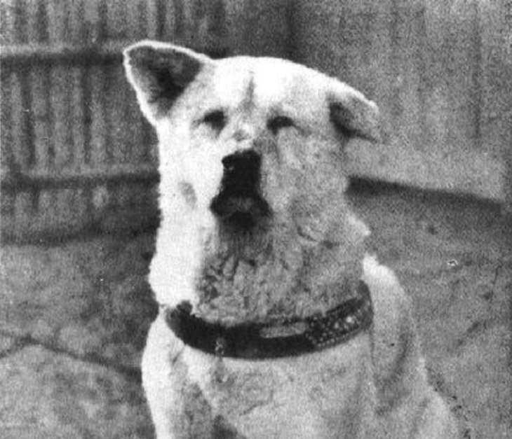 סיפורו של האצ'יקו: הכלב האצ'יקו