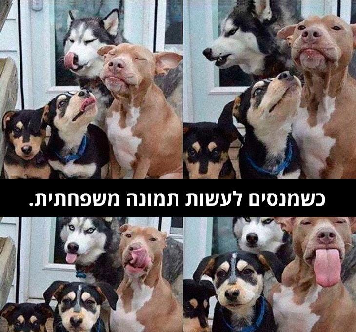 """תמונות כלבים עם כיתוב מצחיק: ארבע תמונות של ארבעה כלבים בתנוחות שונות והכיתוב: """"כשמנסים לעשות תמונה משפחתית"""""""