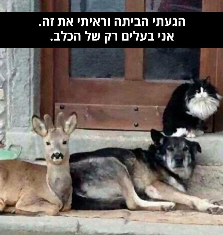 """תמונות כלבים עם כיתוב מצחיק: כלב חתול ואייל יושבים מול מפתן דלת כניסה וכיתוב: """"הגעתי הביתה וראיתי את זה. אני בעלים רק של הכלב"""""""