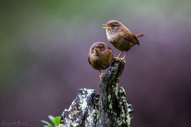 תמונות יפות של ציפורים
