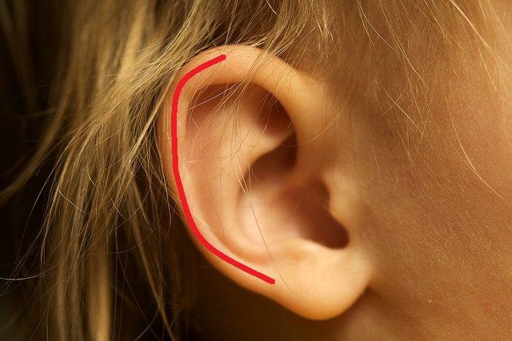 נקודות לחיצה לחימום הגוף: אוזן ובה מסומנת האפרכסת